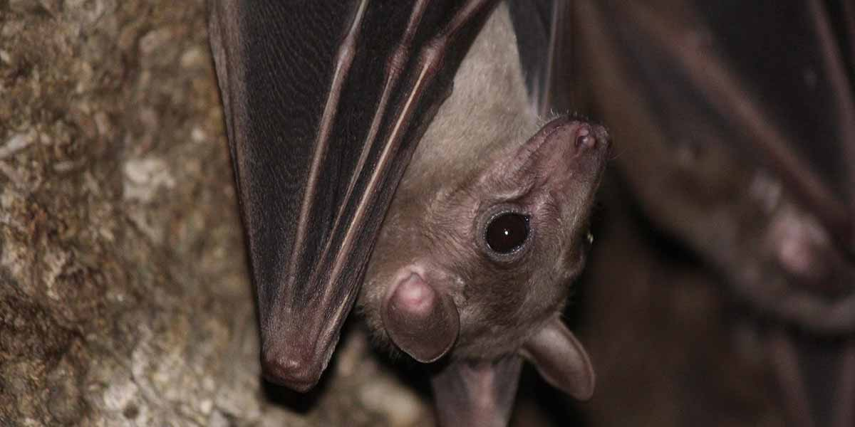 bat removal service in Minneapolis